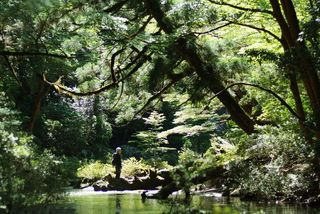 Yakushima blog4.jpg
